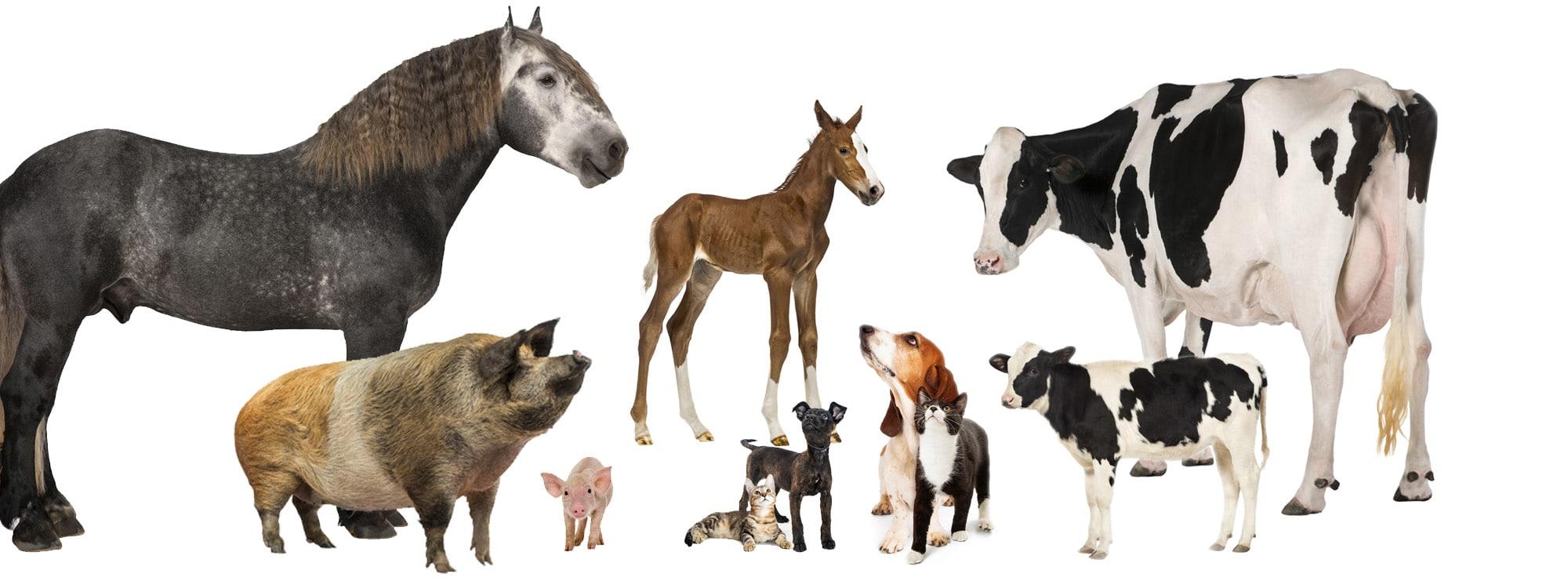 Animal Health Sales Training