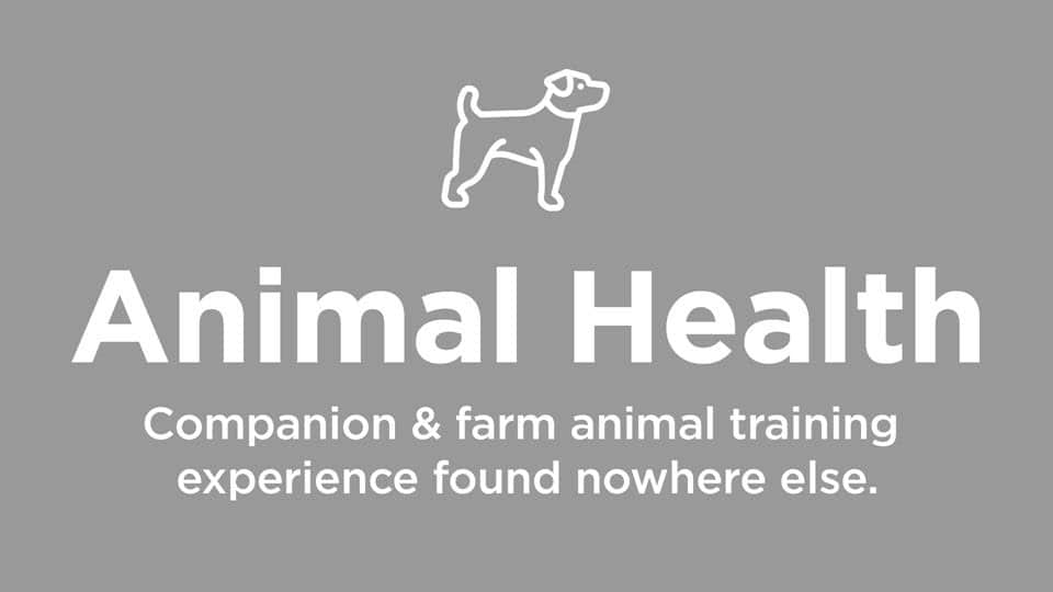 Animal / Companion Animal Training Experience
