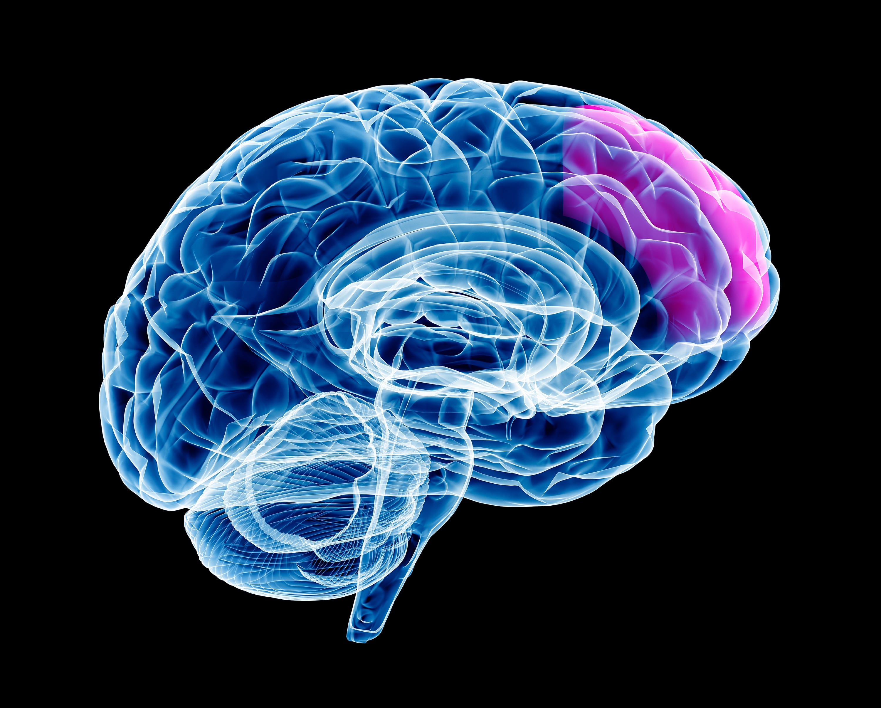Train the Brain: Understanding How the mPFC Relates to Sales Training