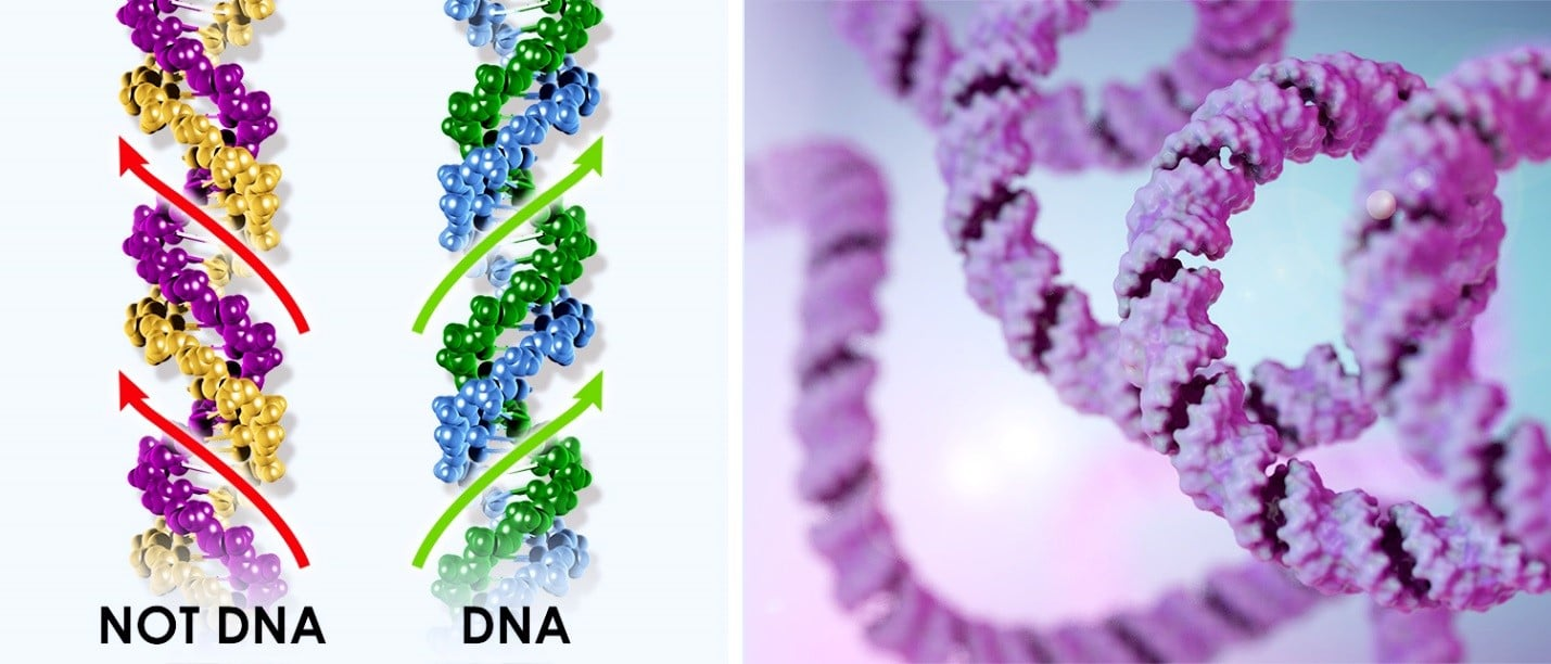 Incorrect and Correct DNA
